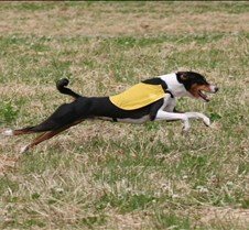 Basenjis_8Jul_Run2_Course3_5219CR2