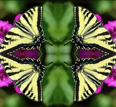 butterflymandala3