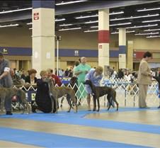 Winners_6-9_Puppy_Dog_Class_8486CC