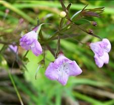 tinypinkflower