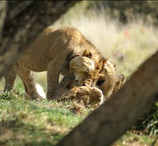 Wild Animal Park 03-09 152