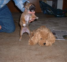puppy picts 9-21-03 008