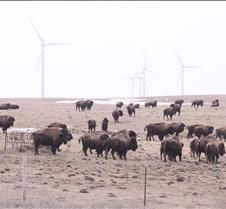 wind turbines buffalo