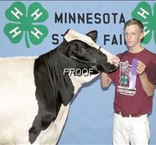 Registered Holstein Summer Yearling Scot