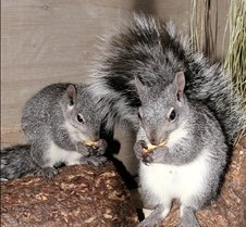 082102 Squirrel 119