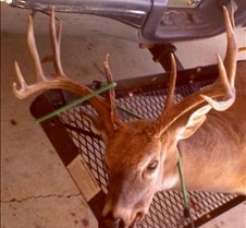 2010+LBL+Tennessee+Youth+Quota+Hunt
