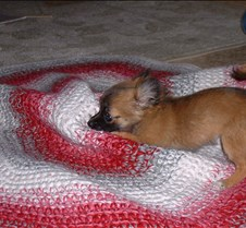 puppy picts 9-21-03 074