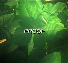 08%2F25%2F2013+Poison+Ivy