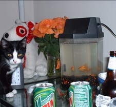kitty picts dec 03 011