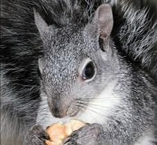 082102 Squirrel 121