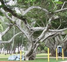 Kailua Park Tree 4-28-05