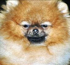 dogshow5