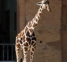 J Zoo 0611_117
