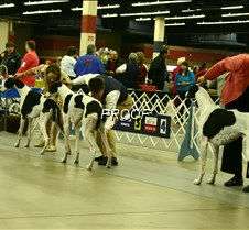 Bred_By_Exhibitor_Dogs_8602