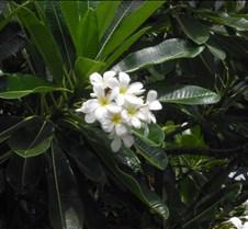 Hawaii 2010 198
