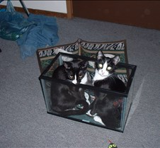 kitty picts dec 03 006