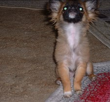 puppy picts 9-21-03 045