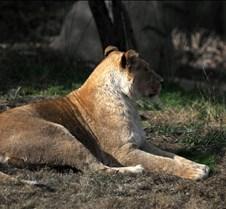 12/03/2011 Memphis Zoo