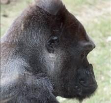 J Zoo 0611_160