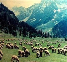 sonmarg-valley
