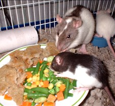 day21_1eating
