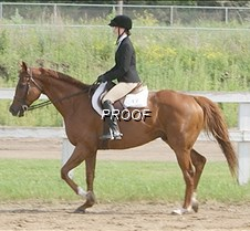 4-H Madison Knoblauch horse