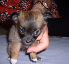 Puppy Picts 052
