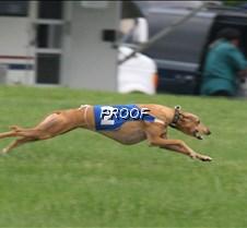 Run2_TestDog_IMG_6309 copy