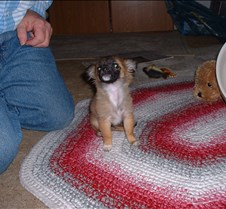puppy picts 9-21-03 040