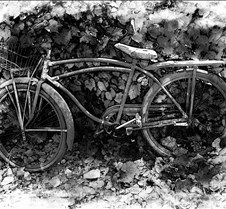 BikeInLeavesbw2