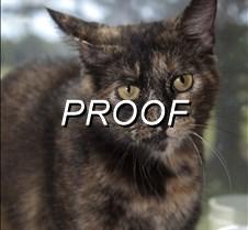 082713_POW_cat