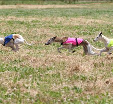 Whippets_8July_Run2_Course6_5049