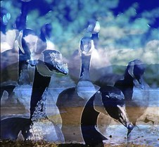 geese 100_2562 1a
