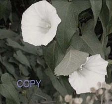 say copy 63.jpg