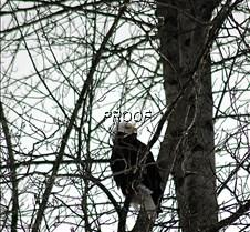 eagletree-3