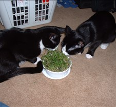 Cat Grass Fun 2