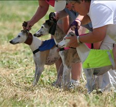 Whippets_8July_Run2_Course6_5047