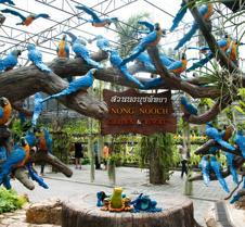 Nong Nuch Garden