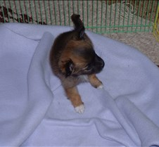Puppy Picts 030