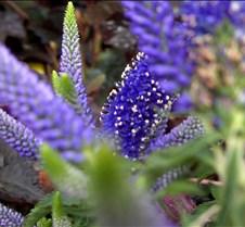 spikyflower