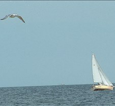 sailboat seagull
