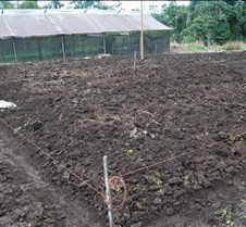 June 30, 2014 terreno preparado para siembra