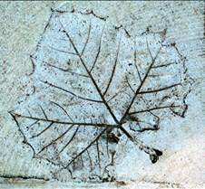 leafimprint