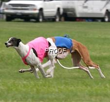 Run2_Specials _Course2_6505 copy2
