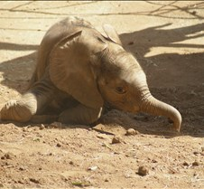 Wild Animal Park 03-09 082
