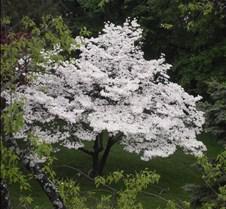 spring 2011 066