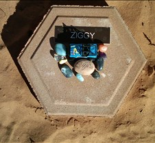 BF734 AO Ziggy