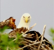 Eagle's Nest in Punta Gorda 3