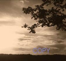say copy 48.jpg