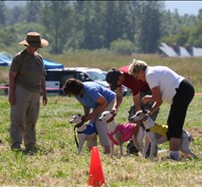Whippets_8July_Run1_Course5_0216